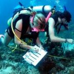 Marine Biology, What you need to know.